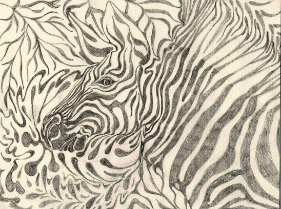 zebra-graphite-4x3.web