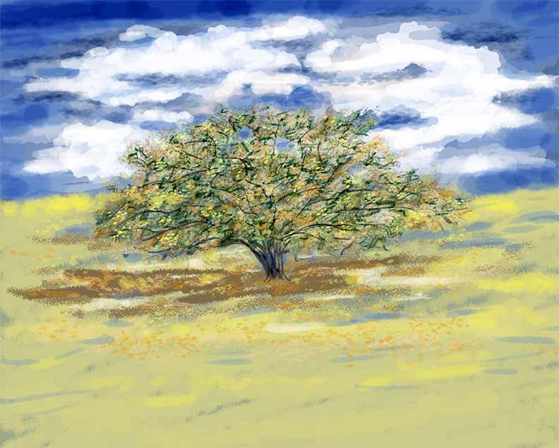 oak tree.web.wip