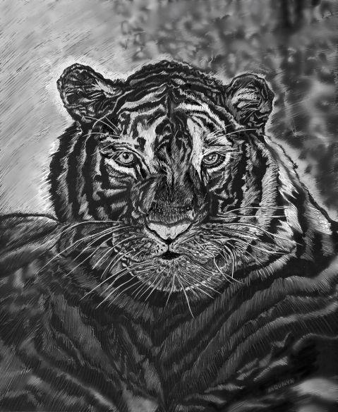 tiger.silver.web